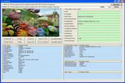 GOGO Exif Image Viewer ActiveX Control 2.91