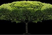 透明树木图片