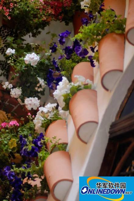 百花丛中最鲜艳手机壁纸