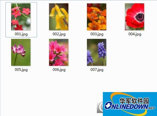 寻找你落地开花的方向手机壁纸