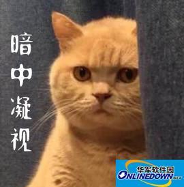暗中观察猫咪表情包