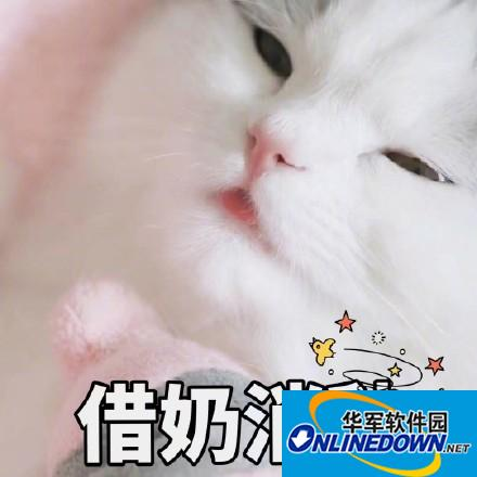 吸猫必备表情包