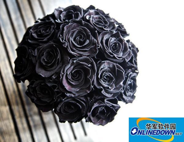 唯美黑色玫瑰花图片大全