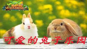 可爱的兔子乐园专区