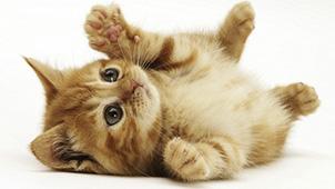 资源猫激活码
