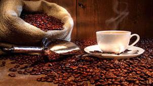 有机咖啡专题