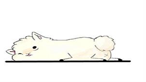 羊驼驼专题