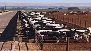 奶牛场管理