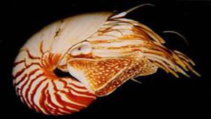 深海生物专题
