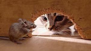 猫捉老鼠大全