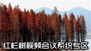 红杉树视频会议系统专区