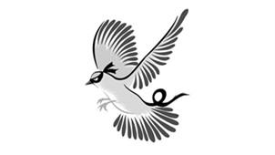 灰鴿子軟件專區