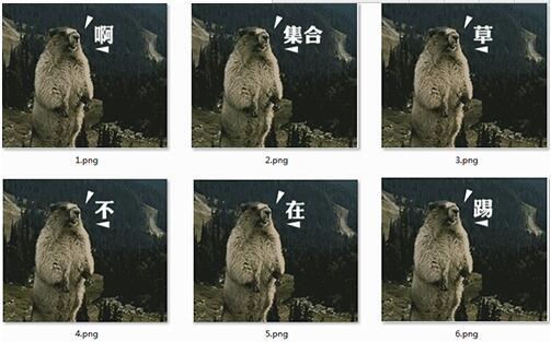 土拨鼠表情包免费下载_土拨鼠表情包官方下载_土拨鼠表情包免费版图片