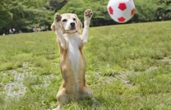狗狗训练大全