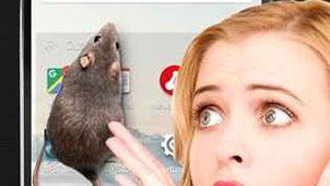 大鼠在屏幕上