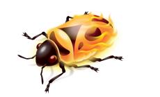 FireBug(萤火虫)