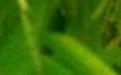 元码输入法(UNICODE 75000 大字符集版)