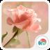 粉色玫瑰-梦象动态壁纸 1.3.5