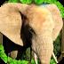 动物王国-大象模拟器1.1.3