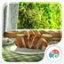 3D早餐-梦象动态壁纸 1.2.11
