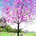 桃花盛开动态壁纸 1.0.6