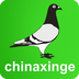 中国信鸽信息网...