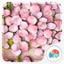 3D花瓣舞-梦象动态壁纸 1.2.4