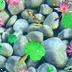 荷塘锦鲤动态壁纸 1.0.5