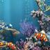 海洋水族馆壁纸