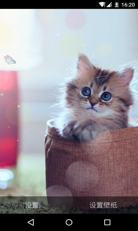 萌货猫星人-梦象动态壁纸