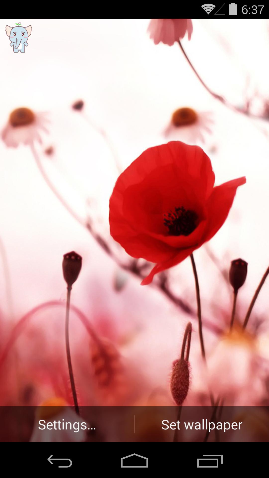 桔梗花的誓言-梦象动态壁纸