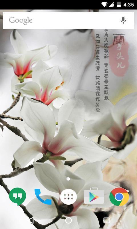 玉兰花-梦象动态壁纸