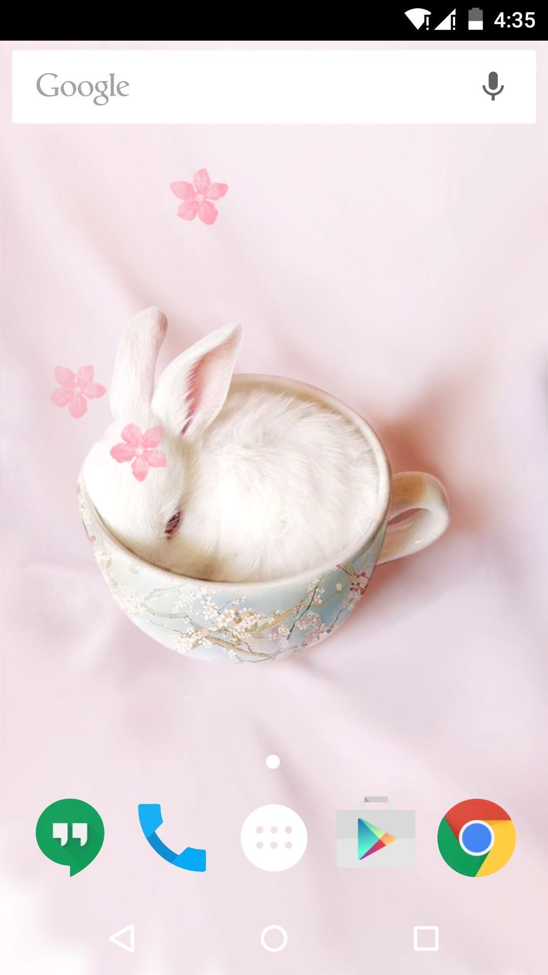 可爱的兔子-梦象动态壁纸