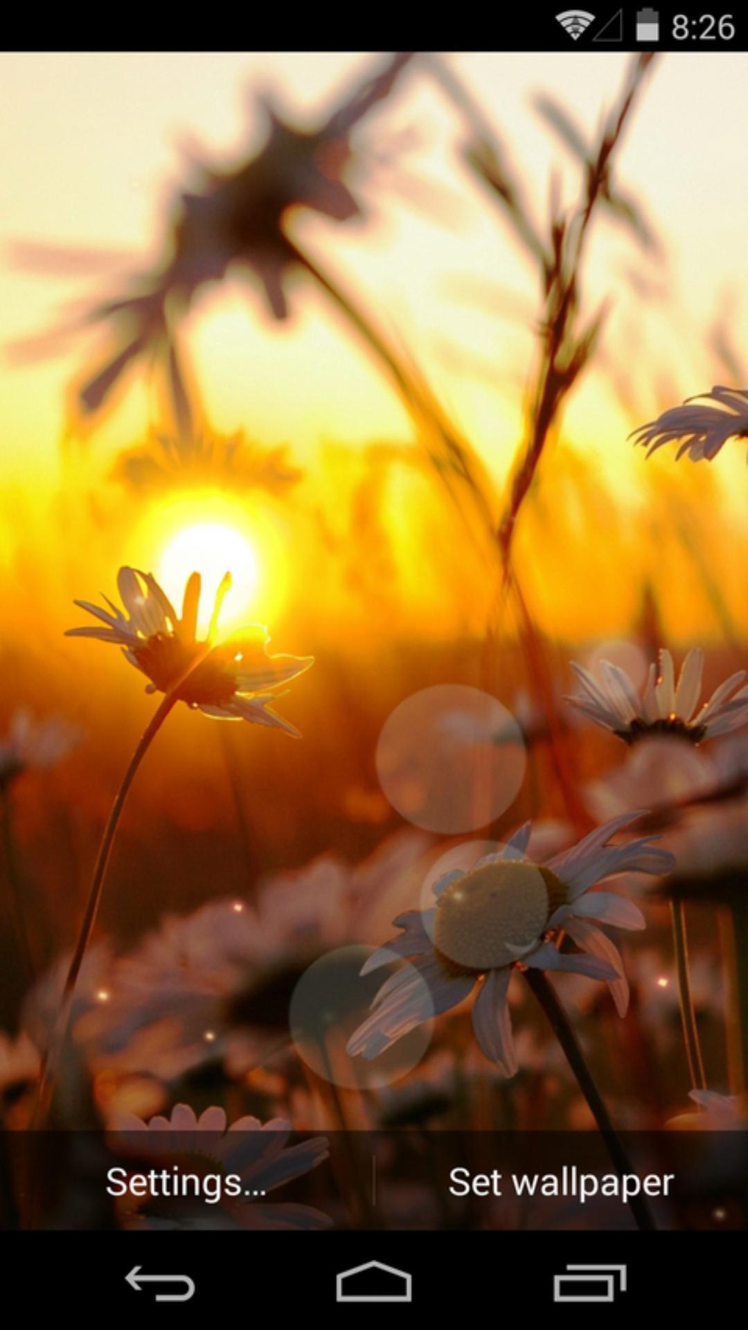 夕阳花语-梦象动态壁纸
