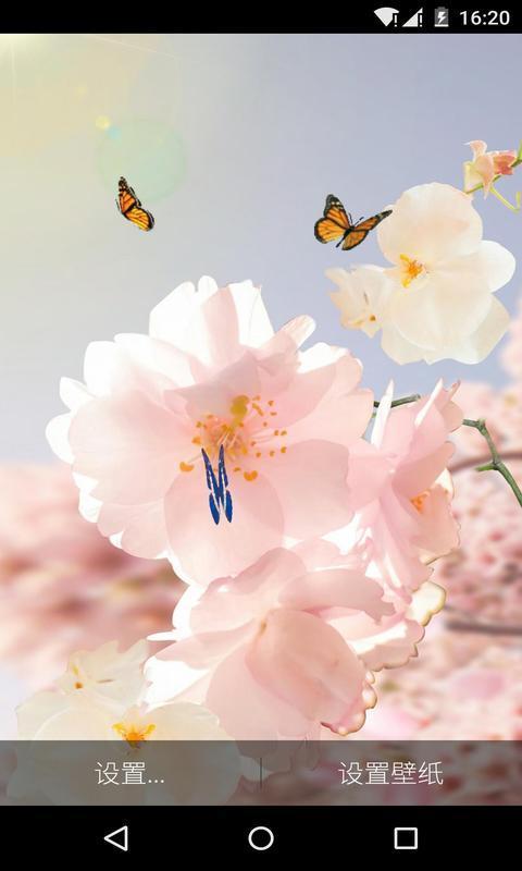 樱花祭下-梦象动态壁纸