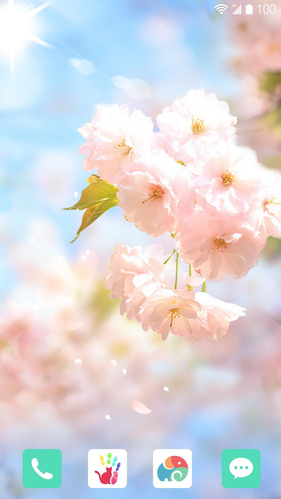 樱花落-梦象动态壁纸