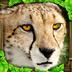 猎豹模拟 1.3
