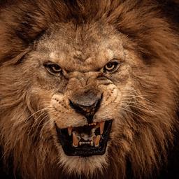 真实野狮子模拟