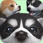 可爱的口袋小狗3D 1.0.5.7