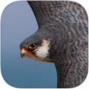 北京猛禽识别iPad版