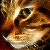 惊人的猫壁纸 1