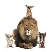 动物叫声音效 - ...
