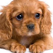 可爱的动物宝宝 - 小狗、小猫、小兔及各种小动物 1.4