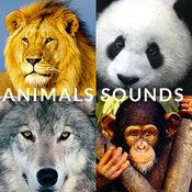 動物園動物的聲...