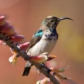 动物通识 免费: 声音与图片 1.0.2