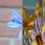 胶片之家 专业版 - 一键胶片效果渲染 2.5
