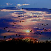 Stray Birds 飞鸟集 泰戈尔 1.1
