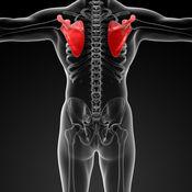 人体解剖学华容道:通过滑动拼图游戏学习图片内容 1