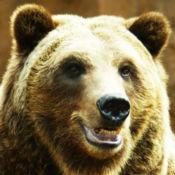 熊声 7.1.1