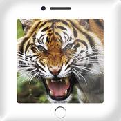 150+ 动物的叫声 + Soundboard 1.2.0